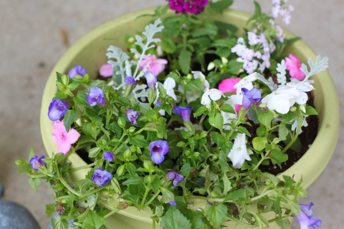 Flower Planter Mix
