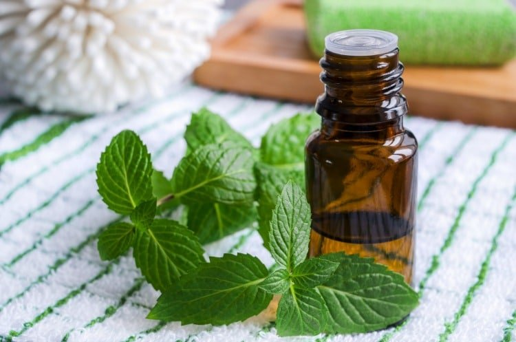 33 Ways to Use Peppermint Essential Oil