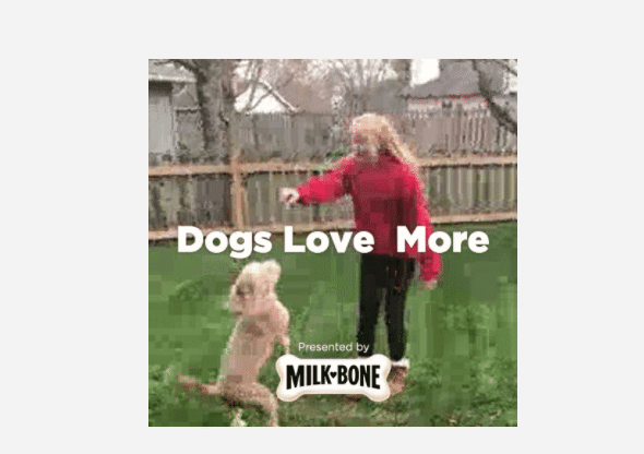 Dogs Are Much More Than Just A Dog